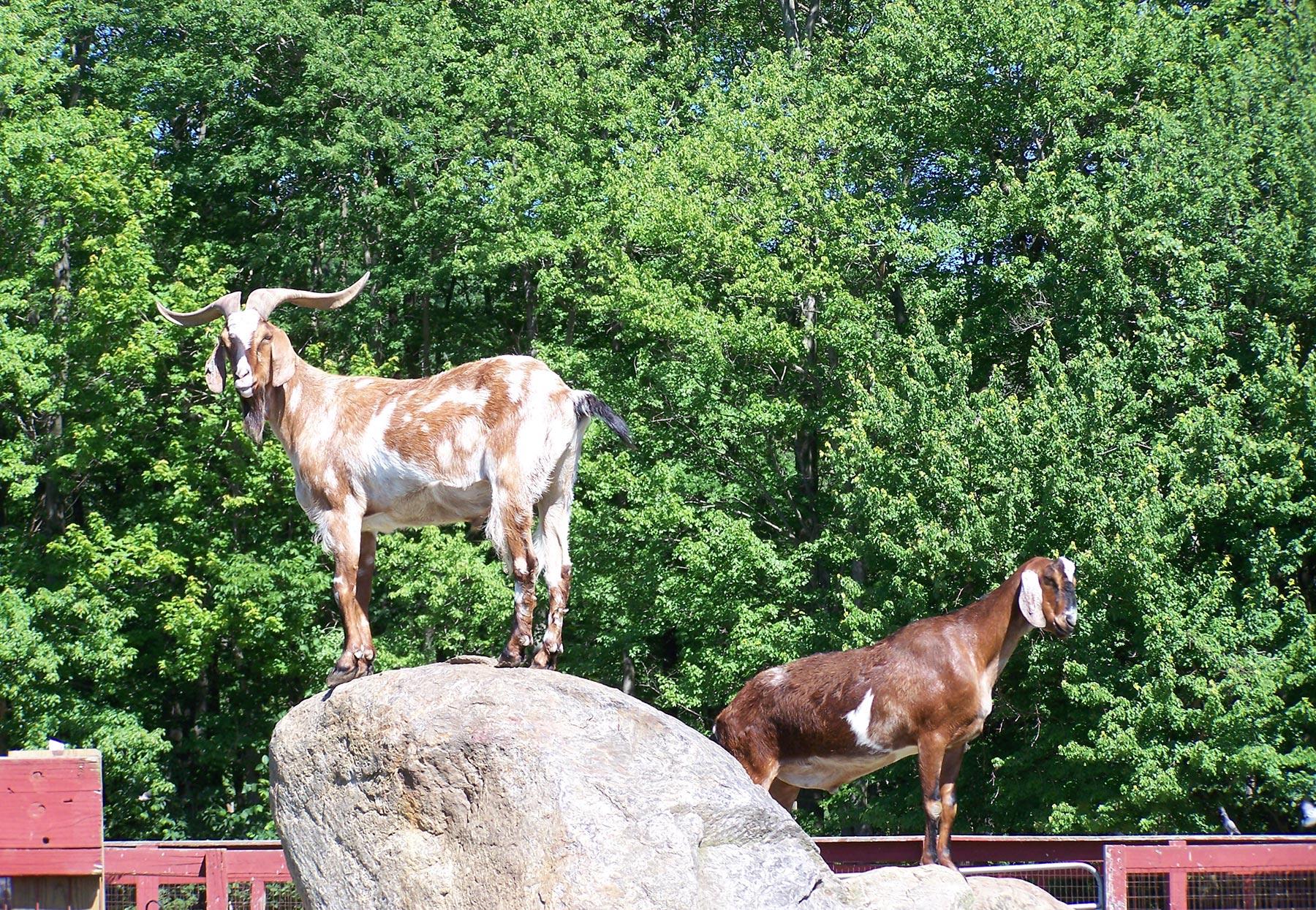 Animal Farm – Silvermans Farm